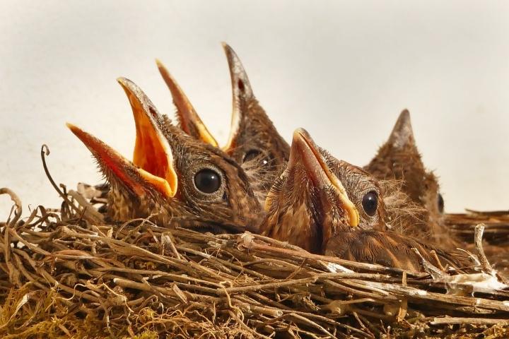 bird-birds-animal-bill