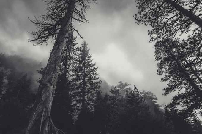 cloudy conifers creepy dark
