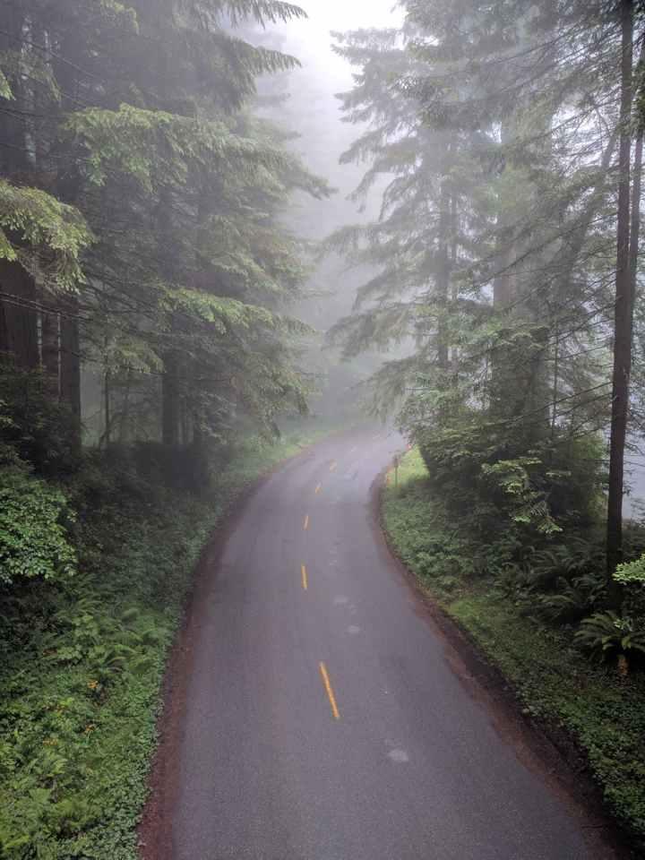 empty asphalt road between trees