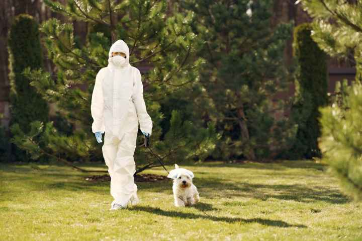 person in white protective suit walking on green grass field with white dog